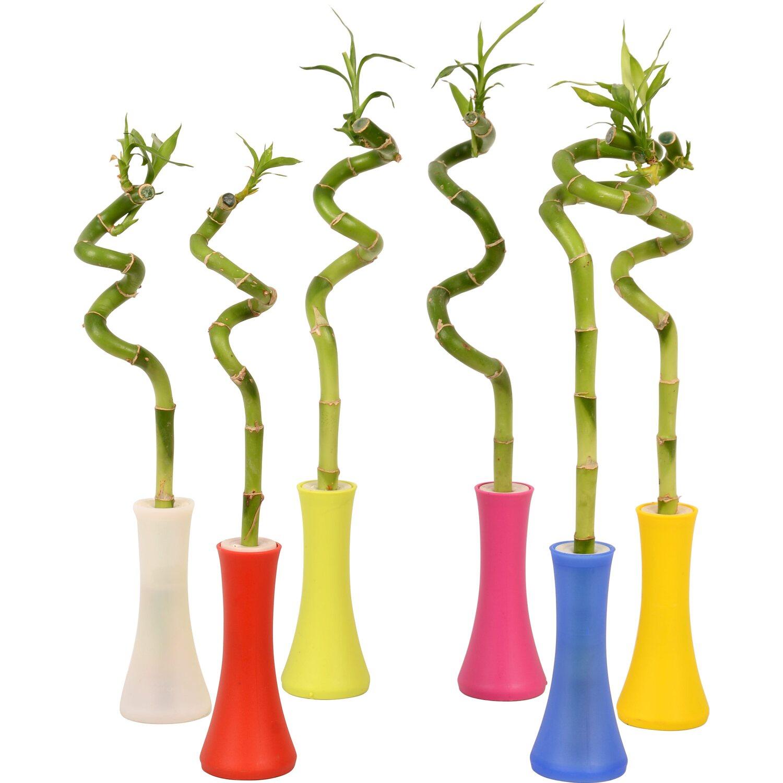 gl cksbambus topf ca 5 cm in vase kaufen bei obi. Black Bedroom Furniture Sets. Home Design Ideas