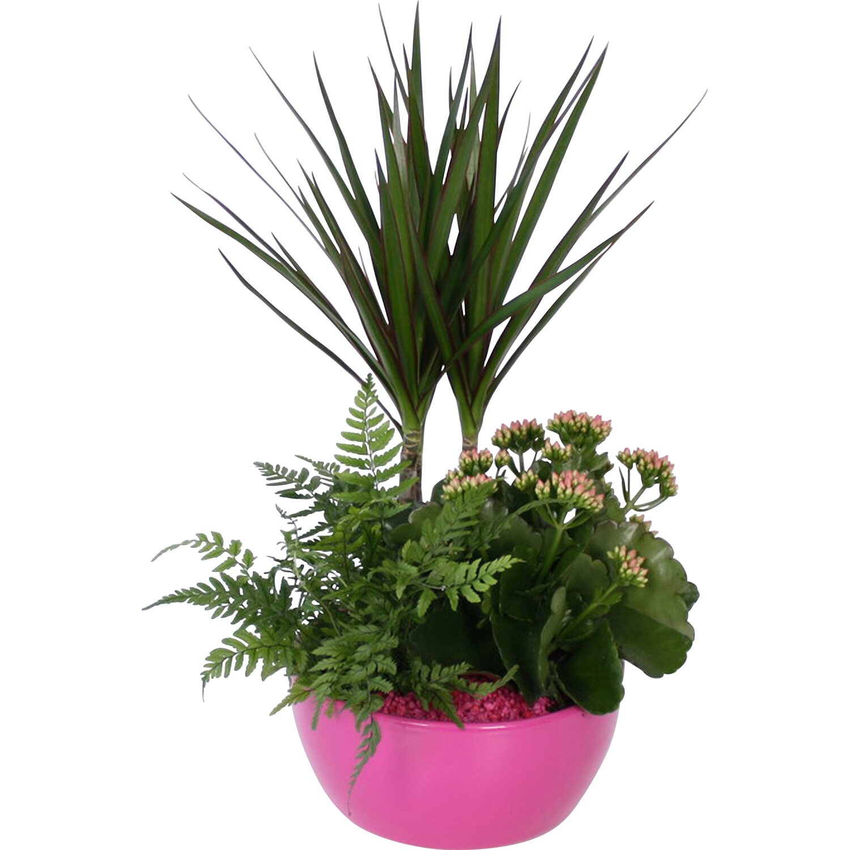 arrangement gro e gr npflanze in farbigem bertopf topf ca 18 cm kaufen bei obi. Black Bedroom Furniture Sets. Home Design Ideas