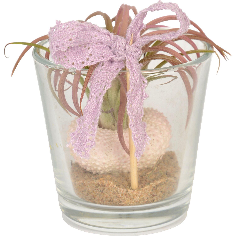 kaktus und sukkulenten mix im glas topf ca 6 cm kaufen bei obi. Black Bedroom Furniture Sets. Home Design Ideas