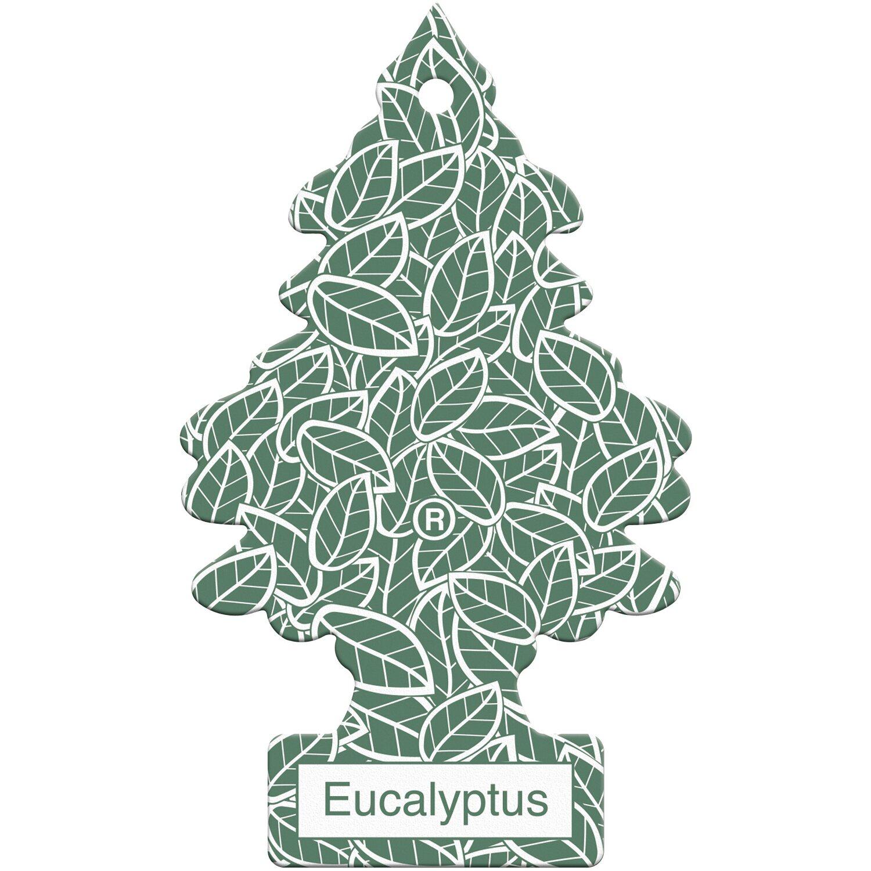 Wunderbaum Eucalyptus