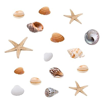 Eurographics Fenstersticker Seashells