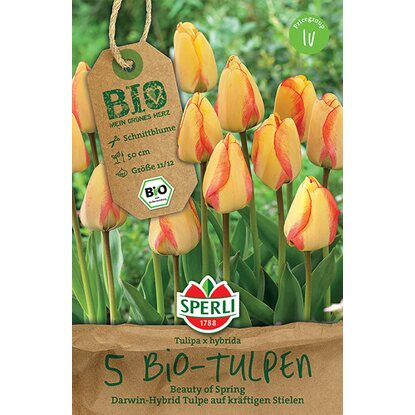 "Sperli Bio Tulpen ""Beauty of Spring"" Gelb-Orange"
