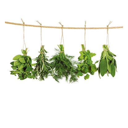Kitchen Glass Hanging Herbs 60 cm x 65 cm