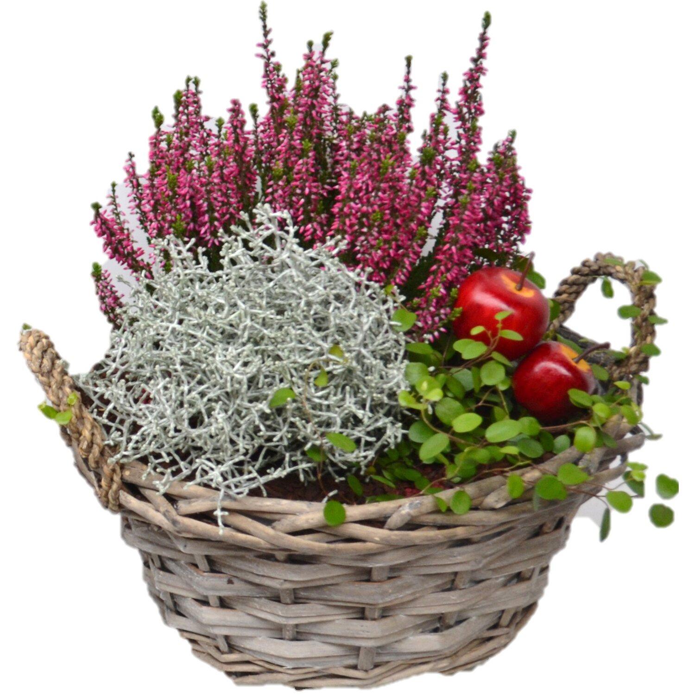 bepflanzte schale herbst calluna weidekorb 3 pflanzen rot ca 28 cm x 28 cm kaufen bei obi. Black Bedroom Furniture Sets. Home Design Ideas