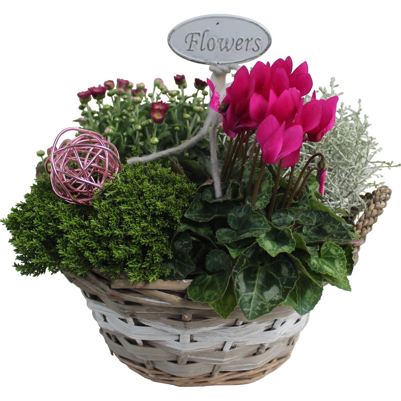 bepflanzte schale herbst cyclament nzer 4 pflanzen rosa ca 28 cm x 28 cm kaufen bei obi. Black Bedroom Furniture Sets. Home Design Ideas