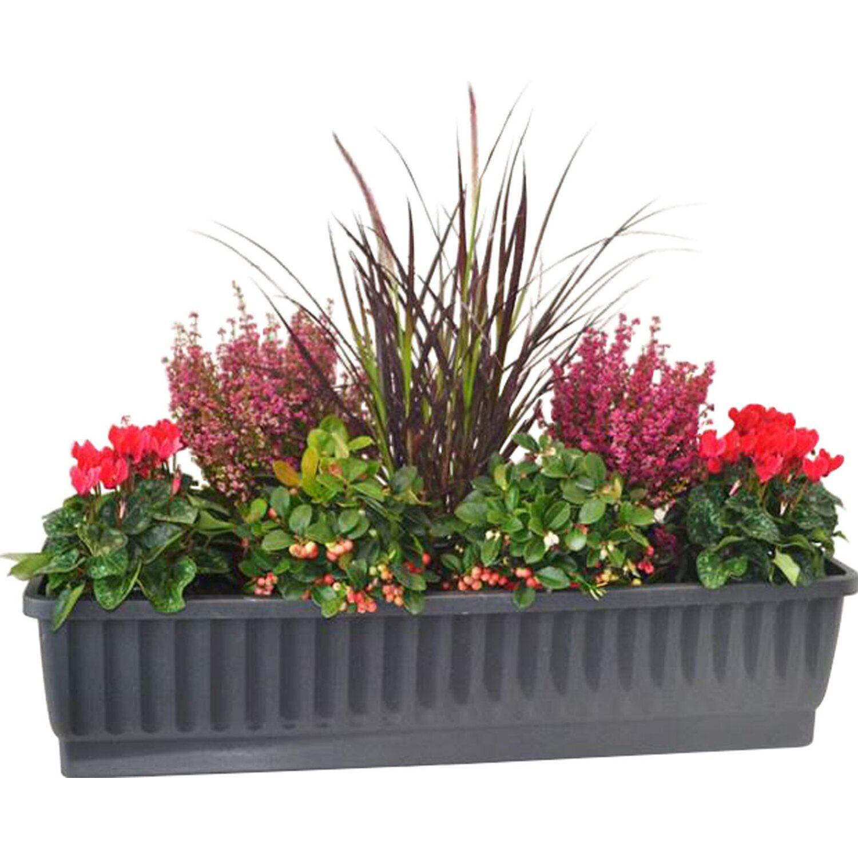balkonkasten set verspielter herbst 8 pflanzen kaufen bei obi. Black Bedroom Furniture Sets. Home Design Ideas