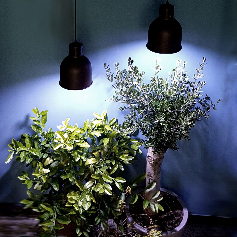 led lampen für pflanzen kaufen
