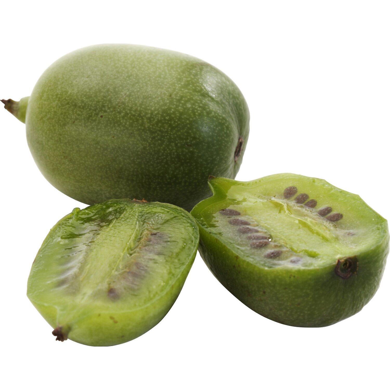 blu mini kiwi weiki topf ca 12 cm kaufen bei obi