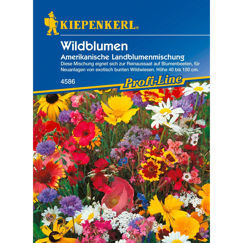 Wildblumen Amerikanische Landblumenmischung
