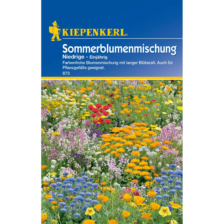 Kiepenkerl Sommerblumenmischung Niedrige Mehrfarbig