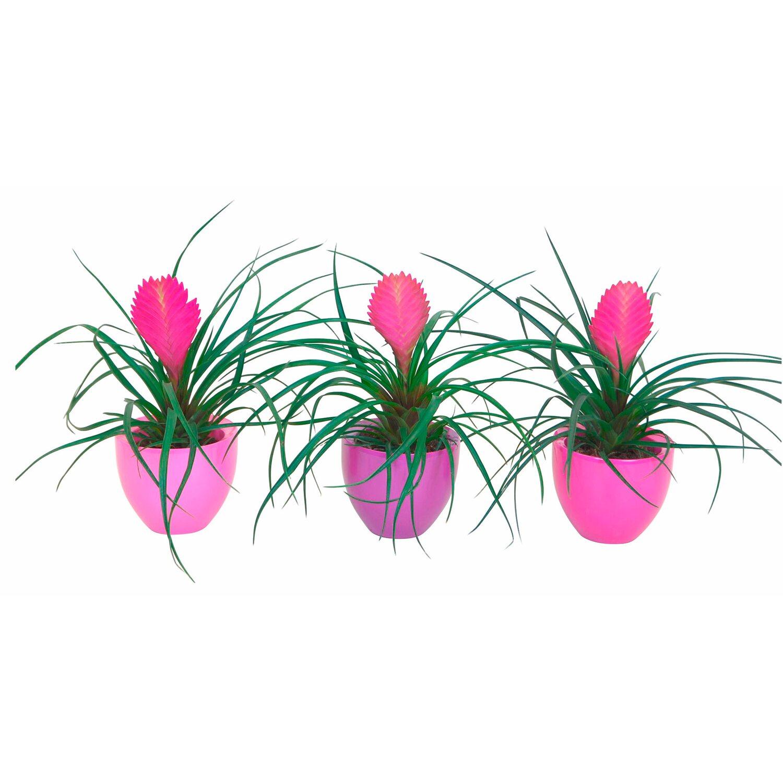 Tillandsien Kaufen tillandsien rosa im keramik gefäß kaufen bei obi