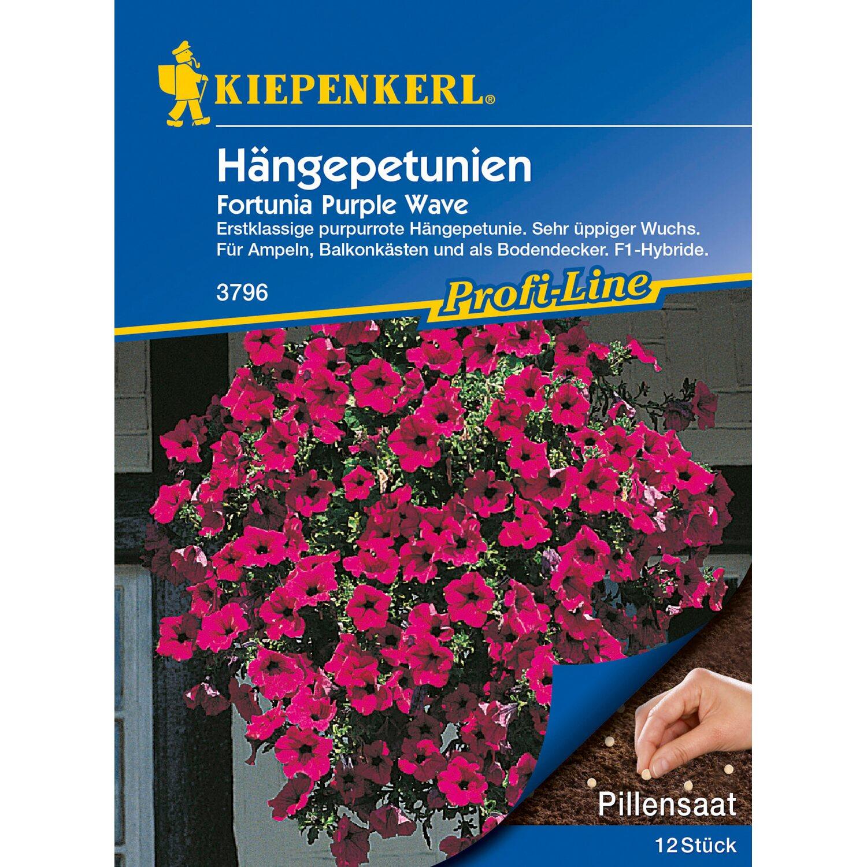 10 Pflanzen Kiepenkerl Saatgut Sonnenbraut ca