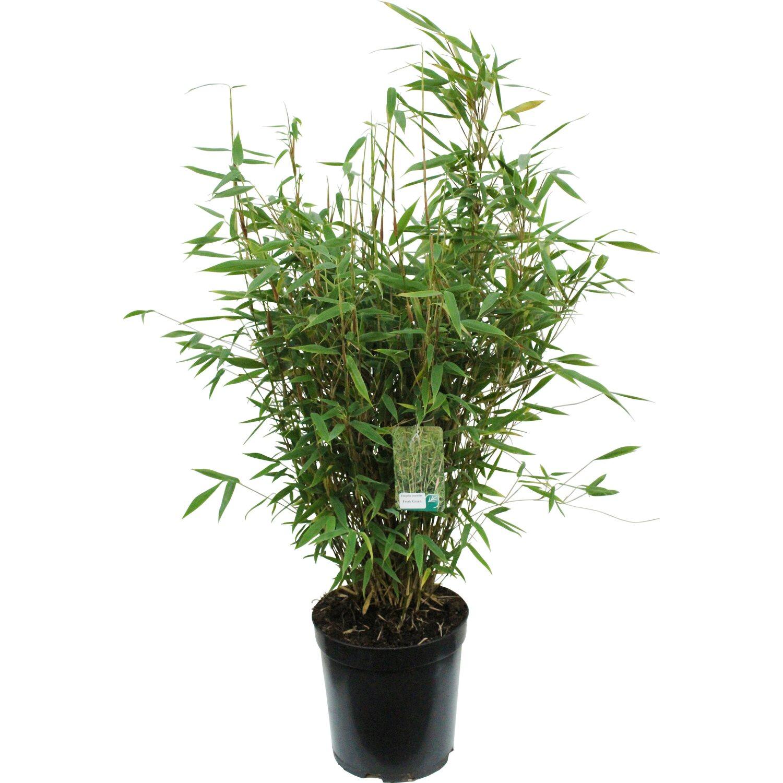 Geliebte Bambus online kaufen bei OBI | OBI.at &DD_04