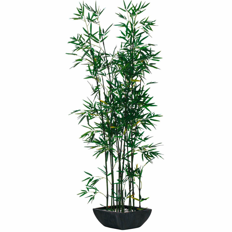 Bambus Pflanze Kaufen Bei Obi