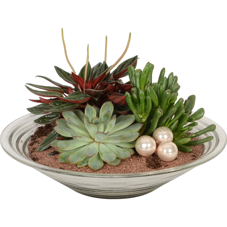 bepflanzte glasschale mit sukkulenten kaufen bei obi. Black Bedroom Furniture Sets. Home Design Ideas