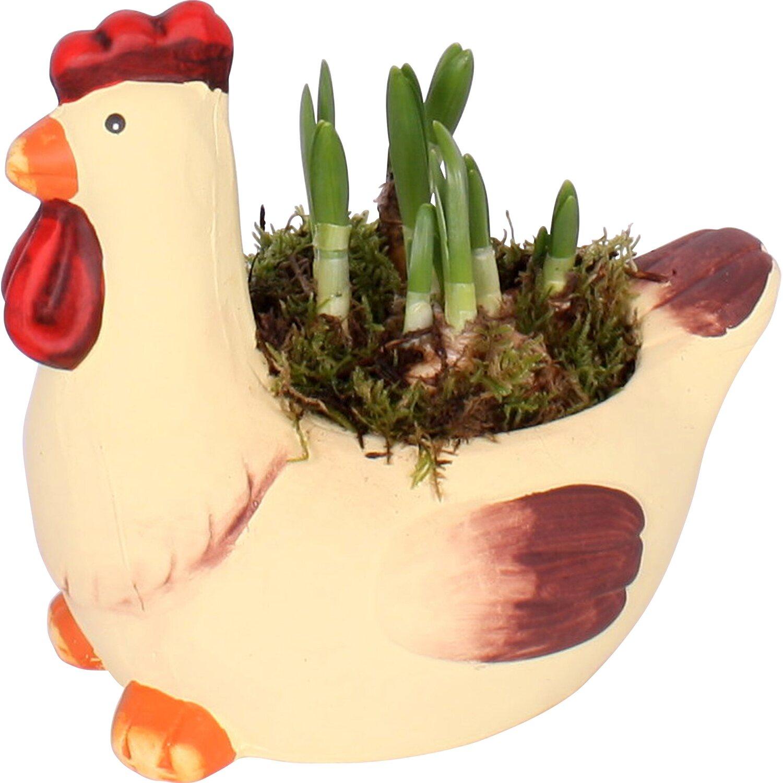 bepflanzter keramik hahn mit narzissenzwiebeln kaufen bei obi. Black Bedroom Furniture Sets. Home Design Ideas