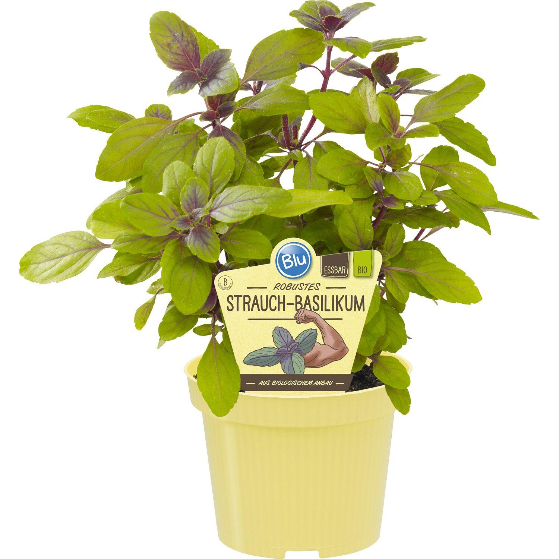 obstpflanzen gem sepflanzen online kaufen bei obi. Black Bedroom Furniture Sets. Home Design Ideas