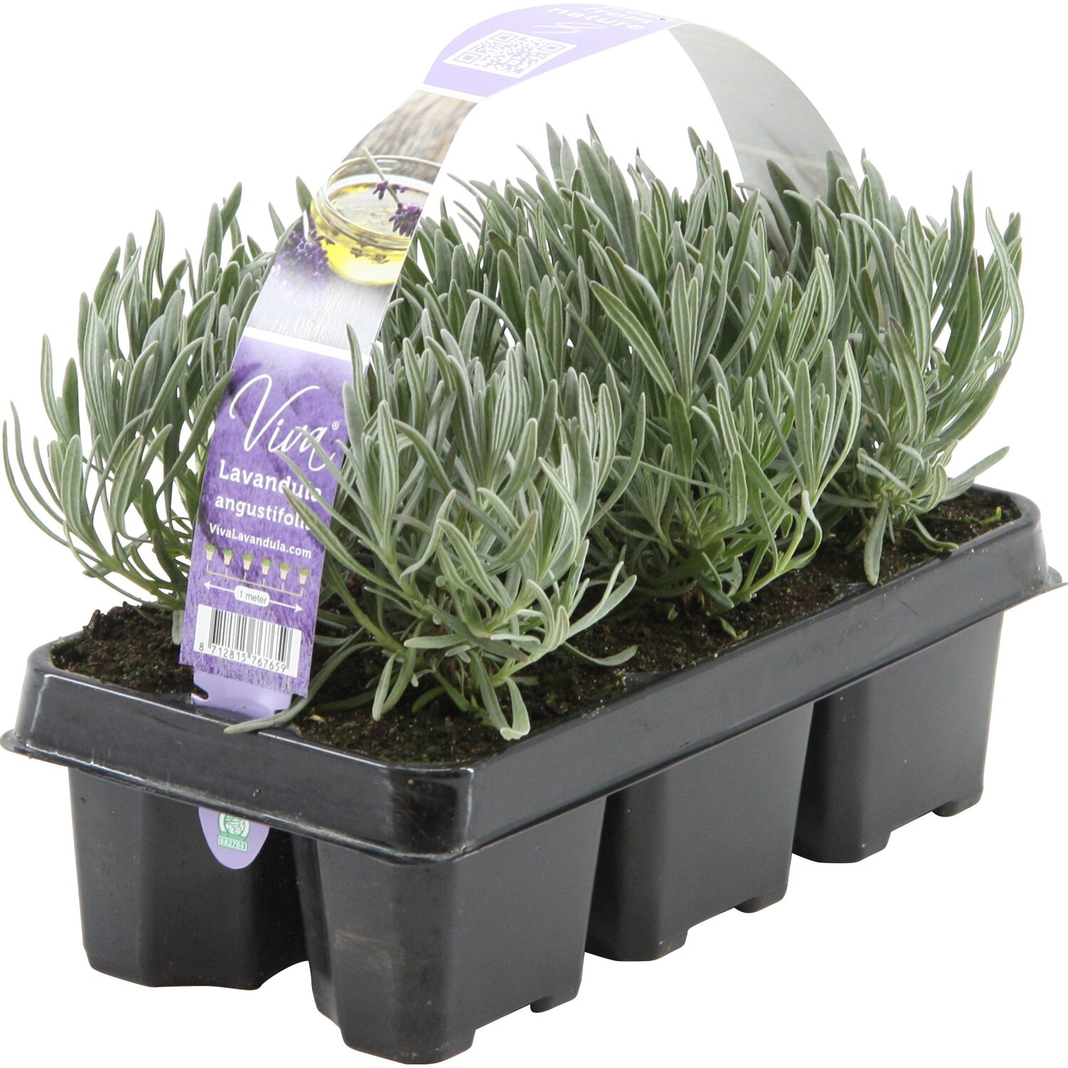 obi lavendel hidcote 6er pack lavandula angustifolia kaufen bei obi. Black Bedroom Furniture Sets. Home Design Ideas