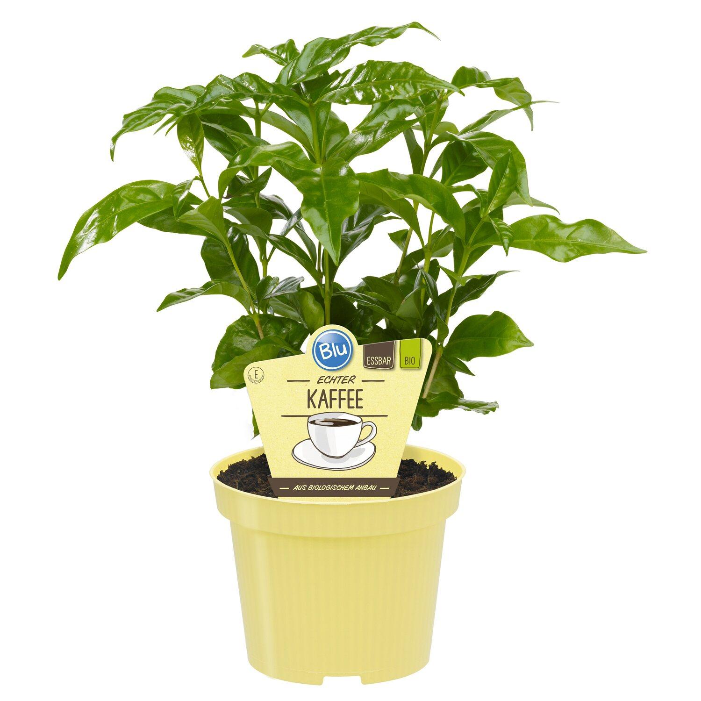 weitere obstpflanzen gem sepflanzen online kaufen bei obi. Black Bedroom Furniture Sets. Home Design Ideas