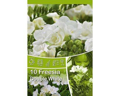 Top Freesien gefüllt Weiß kaufen bei OBI @AZ_93