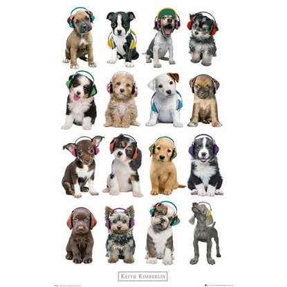 Maxiposter Keith Kimberlin - Puppies headphones 61 cm x 91,5 cm