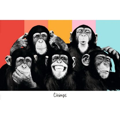 Maxiposter The Chimp - Compilation 61 cm x 91,5 cm