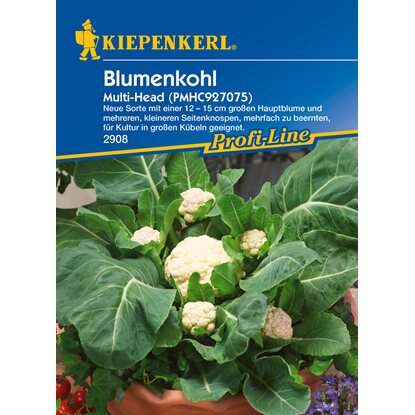 Blumenkohl Multi-Head F1
