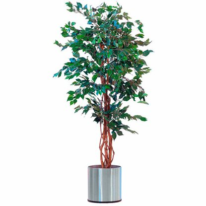 Best of home Kunstpflanze Ficus Benjamini 170 cm