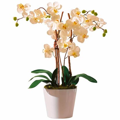 Best of home Kunstpflanze Orchideentopf Elegance 54 cm