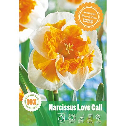"Split Narzisse ""Love Call"""