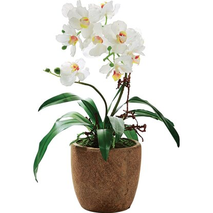 Best of home Kunstpflanze Orchidee Rusty