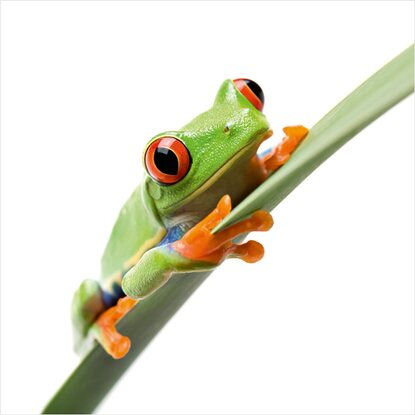 Eurographics Deco Glass Crazy Frog I 30 cm x 30 cm