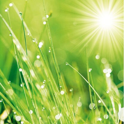 Eurographics Deco Glass Lush Morning Grass 30 cm x 30 cm