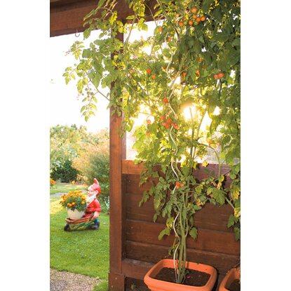 obi pflanzstab 1 80 m f r tomaten und andere rankpflanzen kaufen bei obi. Black Bedroom Furniture Sets. Home Design Ideas