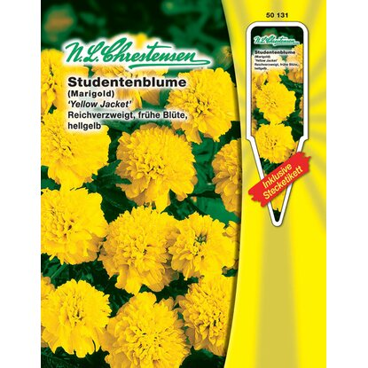 "N.L. Chrestensen Studentenblume ""Yellow Jacket"""