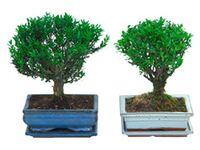 zimmerpflanzen kaufen bei obi. Black Bedroom Furniture Sets. Home Design Ideas