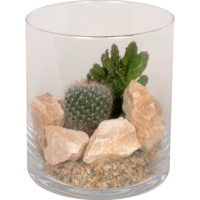 bepflanztes glas mit kakteen und deko stein topf ca 15 cm kaufen bei obi. Black Bedroom Furniture Sets. Home Design Ideas