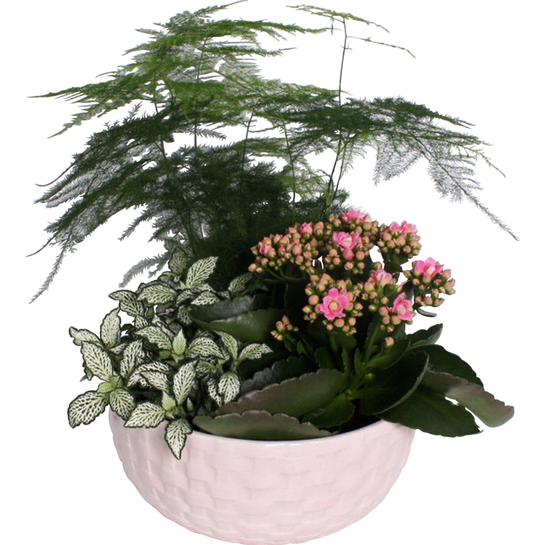 flammendes k thchen und gr npflanzen im keramik gef topf ca 20 kaufen bei obi. Black Bedroom Furniture Sets. Home Design Ideas